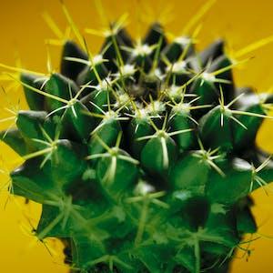 Bild #1 - Cactus Utilities