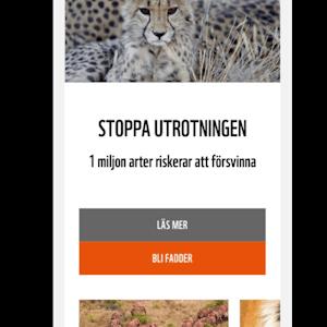Bild #9 - Triggerfish webbyrå